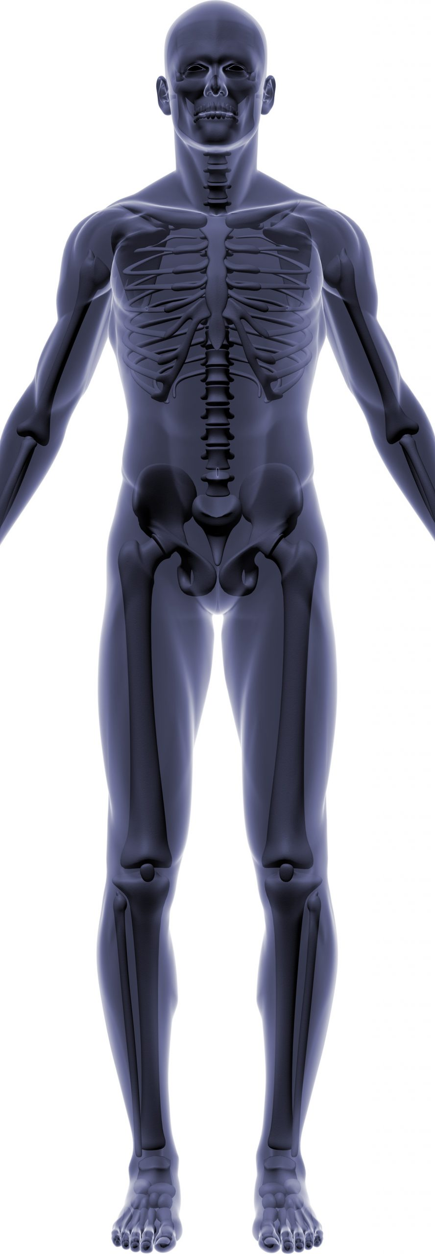 Male Transparent Body and Skeleton Diagram